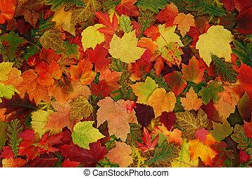 hoja, de, otoño