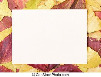 hoja de papel, en, un, otoño, leaves.