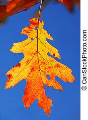hoja del roble, otoño