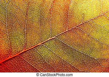 hoja, en, otoño