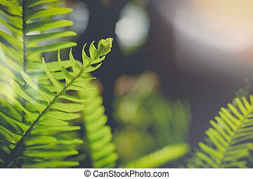 hoja, follaje, relación, primavera, hojas, variar, helecho, tallo, plano de fondo, verde, :, o, pecíolo