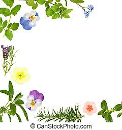 hoja, hierba, flor, frontera