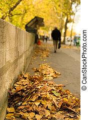 hoja, hojas, jábega, foco, paris., otoño, embankment., montón, caído