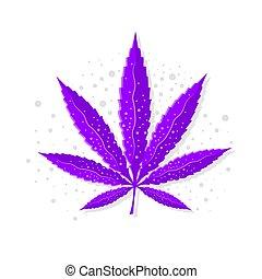 hoja, o, sativa, violeta, marijuana, cannabis, cáñamo, ...