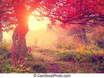 hoja otoño, en, bosque