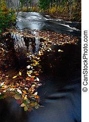 hoja otoño, flotar