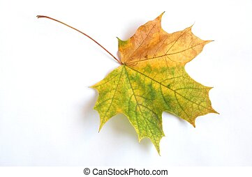 hoja otoño