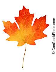 hoja, otoño