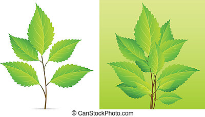 hoja, planta, verde