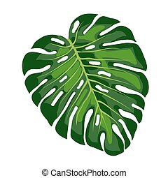 hoja, tropical, monstera