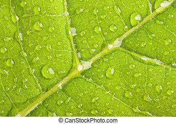 hoja verde, con, agua, gotitas