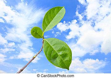 hoja verde, con, en, cielo azul, plano de fondo