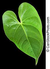 hoja verde, con, un, forma, de, corazón