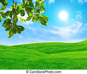 hoja verde, en, campo de la hierba, con, cielo azul