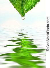 hoja verde, encima, reflexión de agua