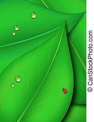hoja verde, plano de fondo, naturaleza
