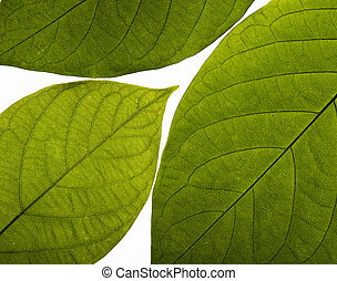 hoja verde, textura