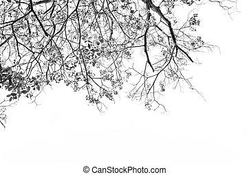 hojas, árbol