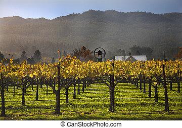 hojas, árbol, amarillo, viñas, niebla, california, vides, napa, otoño, vino