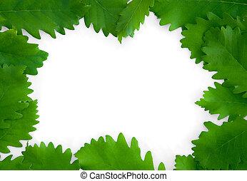 hojas, aislado, papel, fondo verde, marco