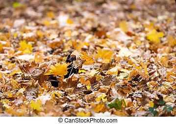 hojas, alimento, extensiones, cuervo negro, seeks, hermoso