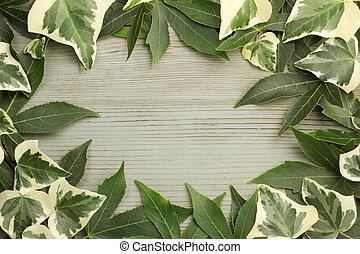 hojas, arce, hiedra