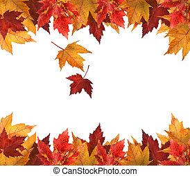 hojas, blanco, arce, aislado