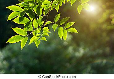 hojas, bokeh, plano de fondo, fresco, verde, foco, rama, ...