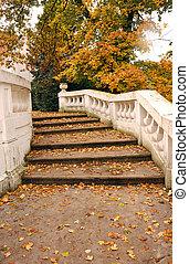 hojas caídas, en, piedra, escalera, otoño, estación