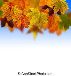hojas, caído, en, el, cielo