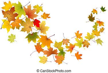hojas, caer, arce