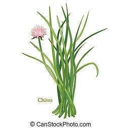 hojas cebolleta, hierba