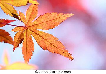hojas, colorido