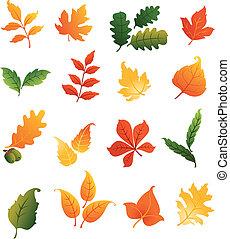 hojas, conjunto, colorido, otoñal