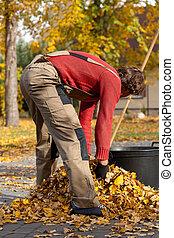 hojas, cubo, relleno, hombre