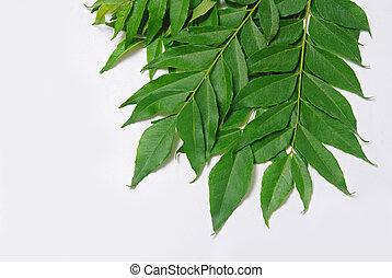 hojas, curry