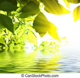 hojas, de, abedul, en, profundo, bosque, debajo, sol, cielo