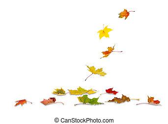 hojas del arce del otoño, caer