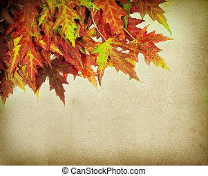 hojas del arce del otoño, en, viejo, papel