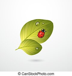 hojas, dos, bicho, verde, dama, rojo