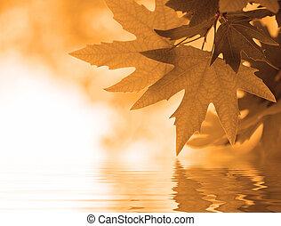 hojas, enfoque poco profundo, otoño, reflejar, agua