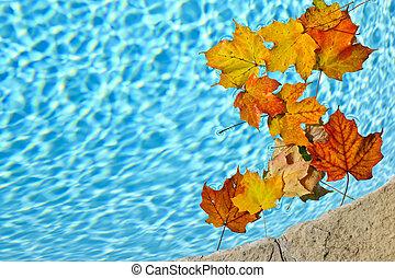 hojas, flotar, piscina, otoño