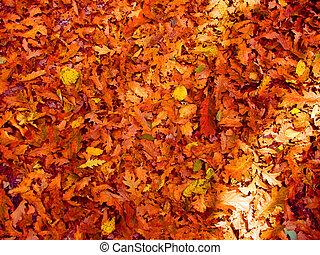 hojas, fondos