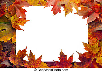 hojas, frontera, arce, otoño