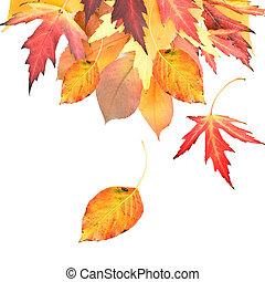 hojas, frontera, otoñal