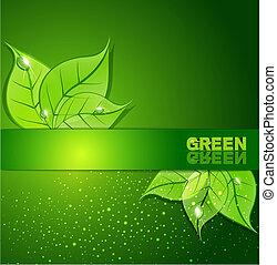 hojas, gotas, fondo verde, rocío