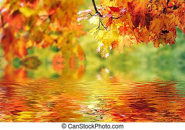 hojas, hermoso, otoño, colorido, parque