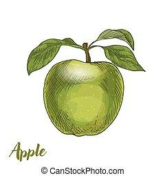 hojas, manzana verde
