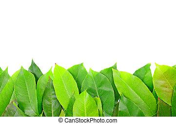 hojas, marco