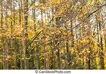 hojas, Otoñal, árboles, otoño, otoño, parque